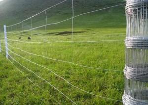 ruloninė tvora miškams